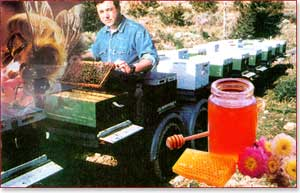 greek honey producer