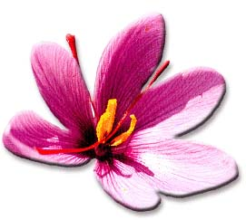 saffronflower3.jpg